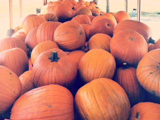 img_pumpkin_flip